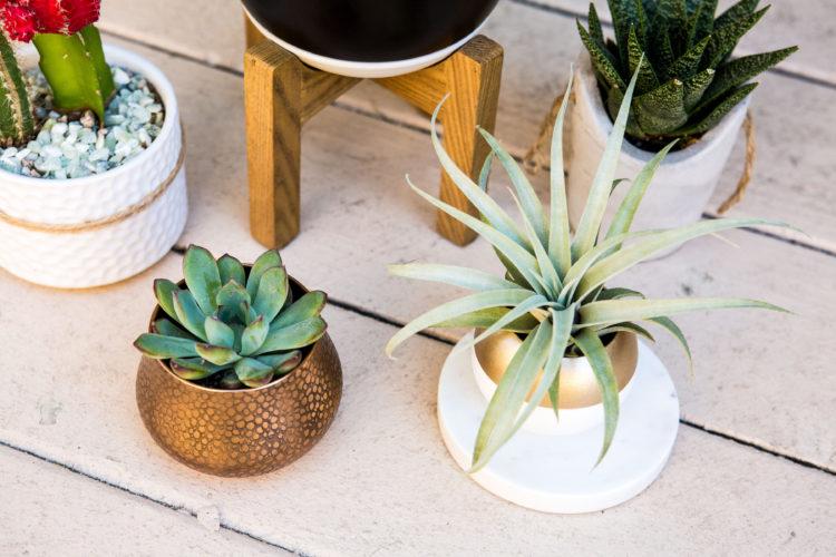 Home Decor The Best Indoor Plants